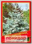 Пихта Одноцветная «Violacea», 5 шт.