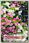 Торения Каваи Микс, 100 шт. Профессиональная упаковка