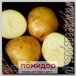 Севок картофеля Лада F1, 500 г