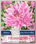 Георгин кактусовый LEILA SAVANNAH ROSE, 2 шт. NEW