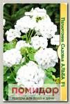 Пеларгония садовая Альба F1, 5 шт.