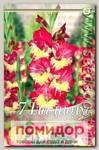 Гладиолус крупноцветковый STEREO, 7 шт.