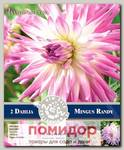 Георгин кактусовый MINGUS RANDY, 2 шт. NEW