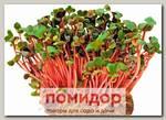 Набор для выращивания микрозелени Редис Ред Корал