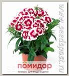 Гвоздика турецкая Диабунда Ред Пикоти, 100 шт. Профессиональная упаковка