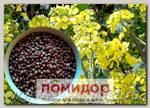 Сидерат (Горчица черная, смесь сортов), 250 г