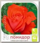 Роза чайно-гибридная АНЖЕЛИКА, 1 шт.