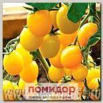 Томат Карамель Желтая F1, 1000 шт. Профессиональная упаковка