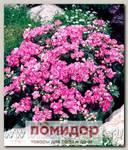 Флокс друммонди Промис Лилак Блю, 100 шт. Профессиональная упаковка