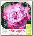 Роза чайно-гибридная АМЕТИСТ, 1 шт.