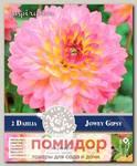 Георгин декоративный JOWEY GIPSY, 2 шт. NEW