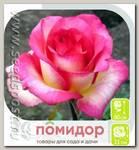 Роза Флорибунда КАРУСЕЛЬ, 1 шт.