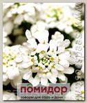Иберис вечнозеленый Вайтаут, 250 шт. Профессиональная упаковка