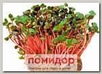 Микрозелень Редис листовой Ред Корал, 5 г