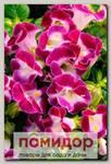 Торения Каваи Маджента, 100 шт. Профессиональная упаковка