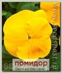 Виола крупноцветковая Маммот Прима Еллорина, 100 шт. Профессиональная упаковка